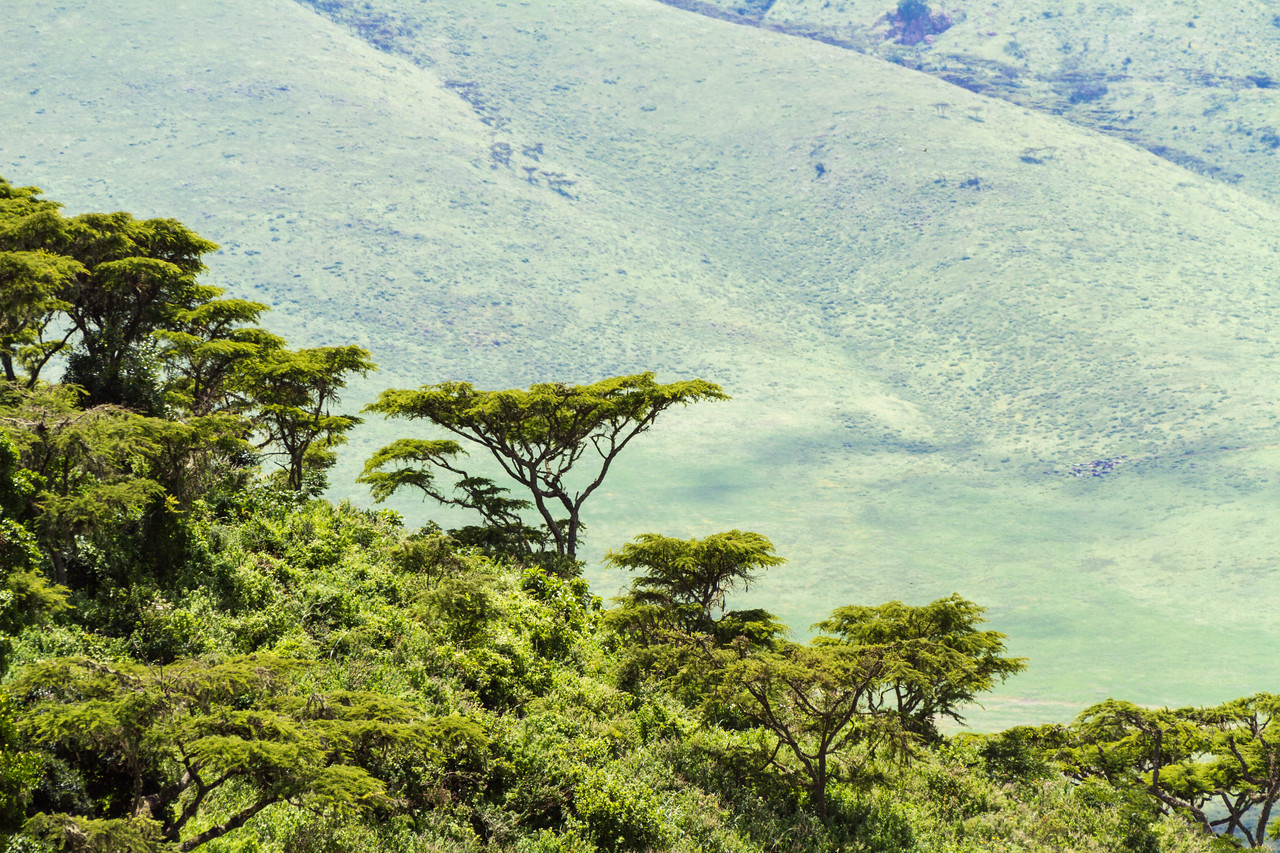 View of trees with mountains - East Africa - Tanzania