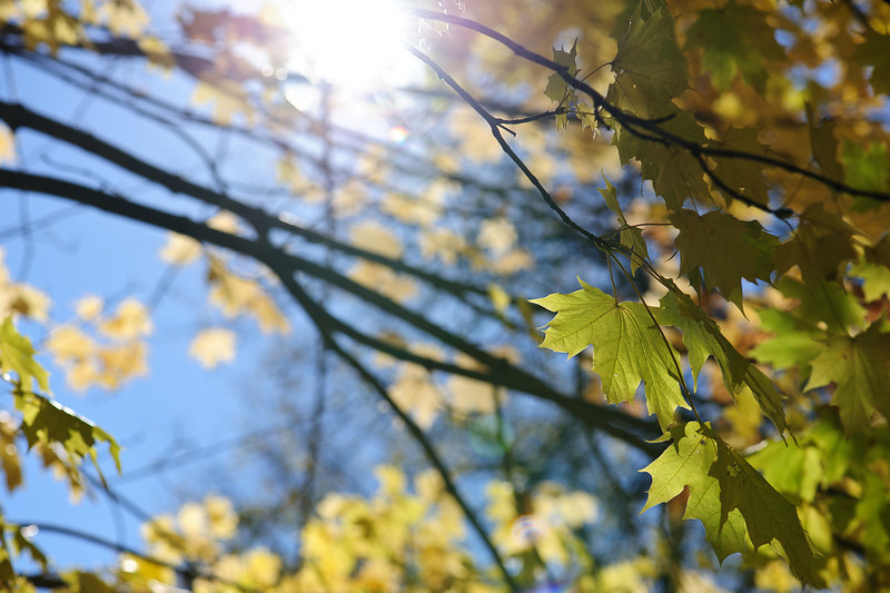 Ray of Leaves
