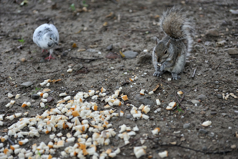Squirrel's Feast