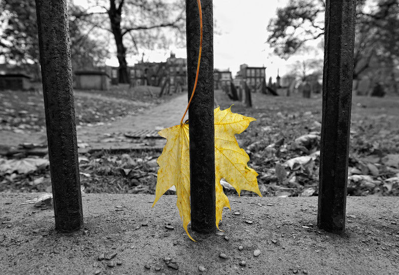 Fall Grave