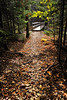 Bridged Path