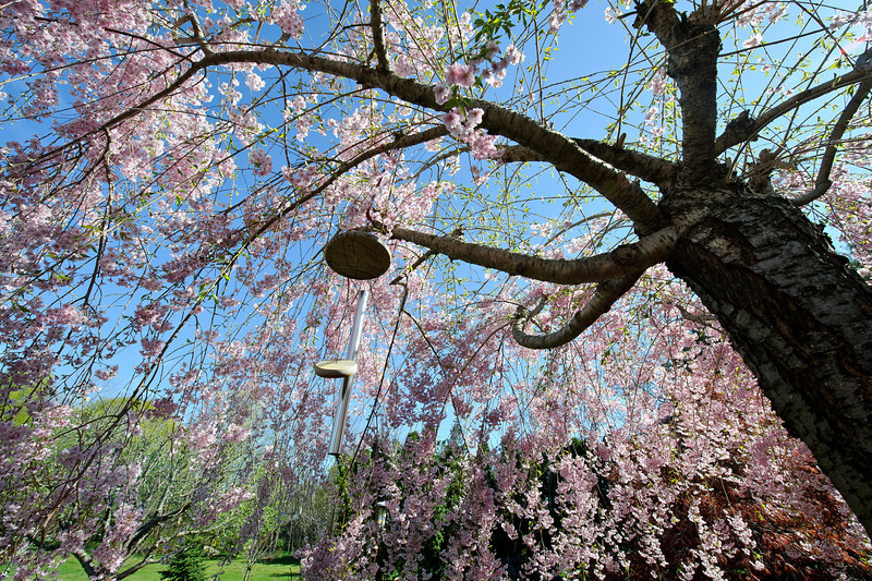 Weeping Cherry Wind Chime