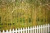 Glistening Bamboo