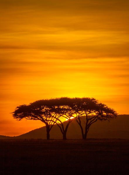 Sunset On The Serengeti