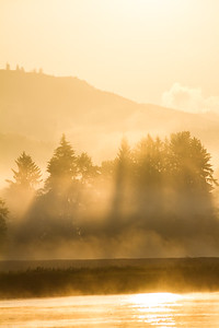 Morning Sunlight Illuminates Layers Of Fog, River & Trees Of The Columbia River & Washington State, USA