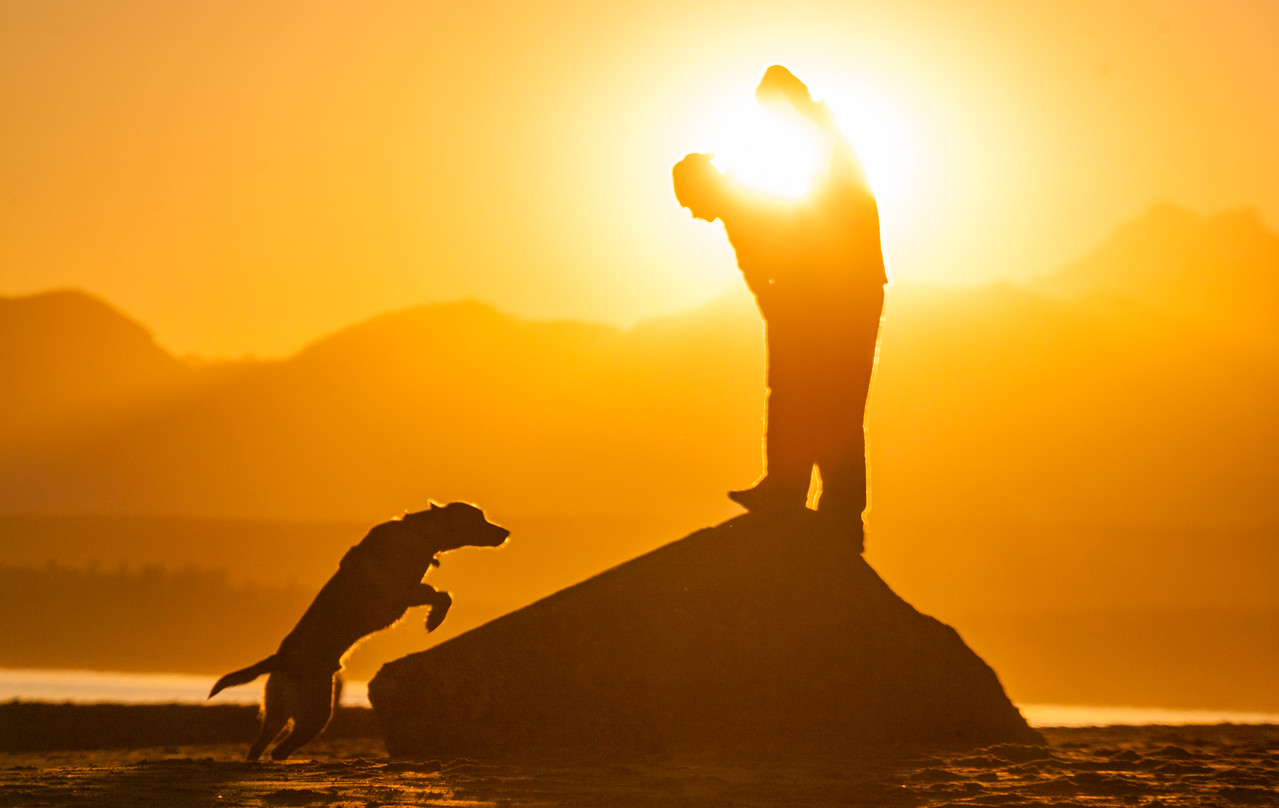 Men playing with dog on beach at sunset