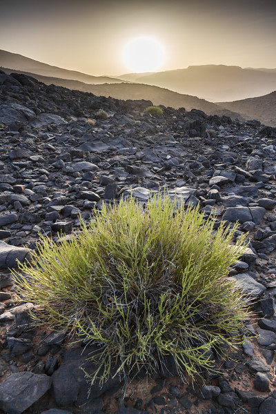 Beauty In The Desolation, Oman