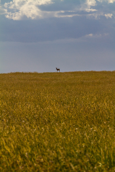 Deer standing on hill - East Africa - Tanzania