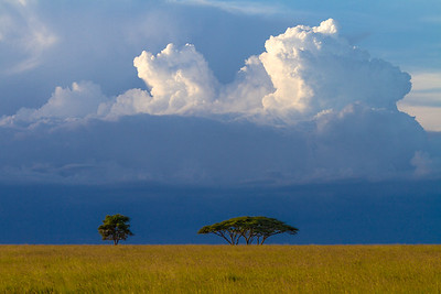 Clouds Over Acacia Trees On The African Savanna, Serengeti National Park, Tanzania
