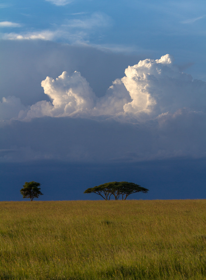 Clouds Over Acacia Trees On The African Savanna II, Serengeti National Park, Tanzania