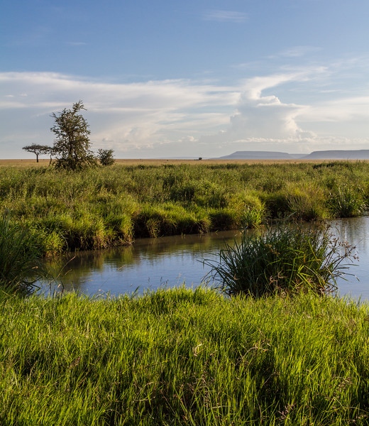 Lake surrounded by grass - East Africa - Tanzania
