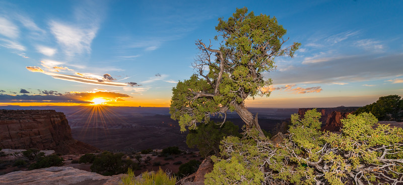 Sunset and foreground juniper trees at Canyonlands National Park, Utah