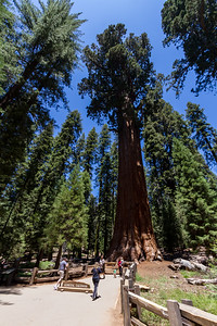 People at Sequoia National Park - USA - California