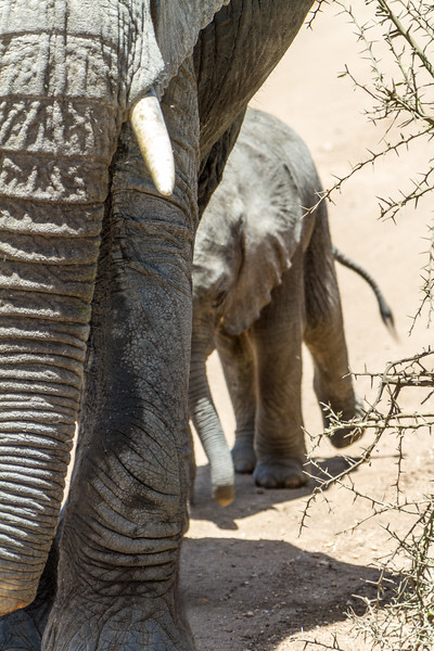 Close-up of elephants - East Africa - Tanzania