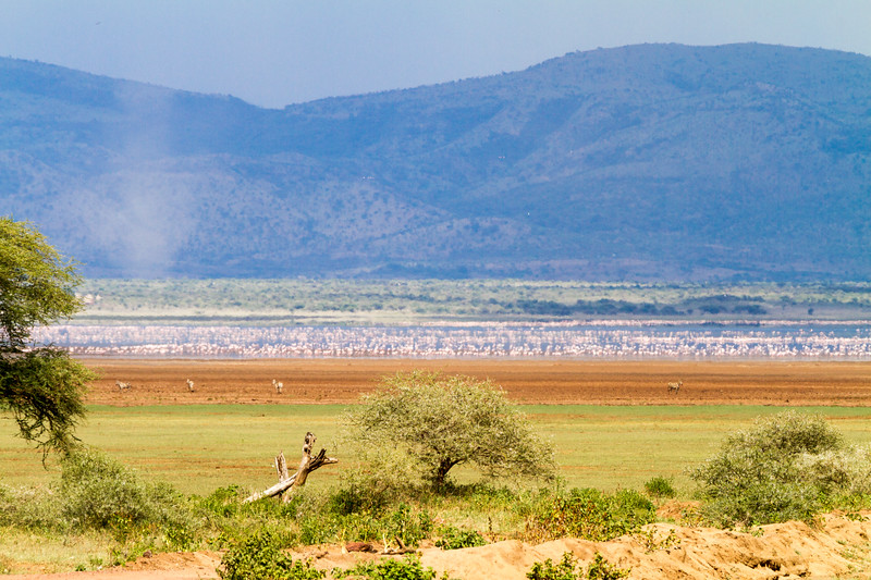 Antelope at Lake Manyara National Park - East Africa - Tanzania