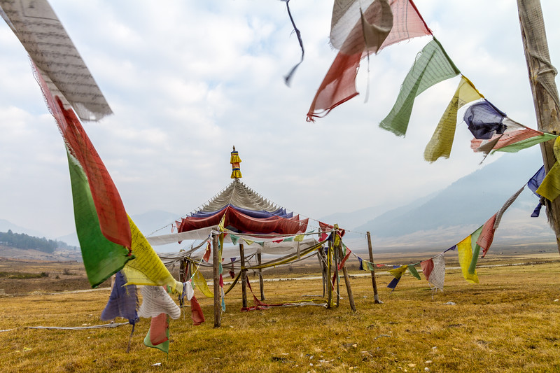 Tibetan Buddhist prayer flags fly in a pole formation in the Phobjika Valley of Central Bhutan