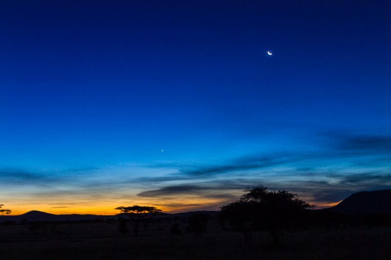 Silhouette of trees against blue sky - East Africa - Tanzania
