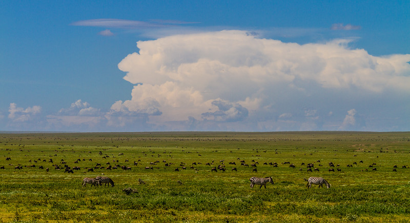Wildebeests and zebras at Serengeti National Park - East Africa - Tanzania