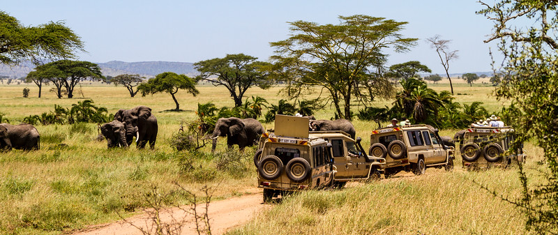 Tourists watching elephants in national park - East Africa - Tanzania