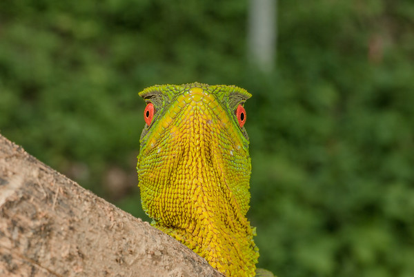 Biodiversity Group, DSC01096