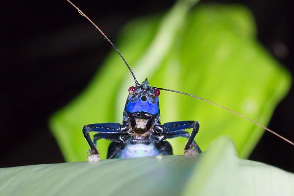 Biodiversity Group, IMG_0169