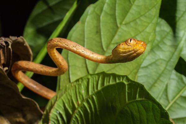 Biodiversity Group, _DSC5967
