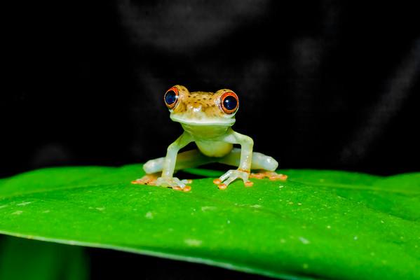 Biodiversity Group, IMGP5621