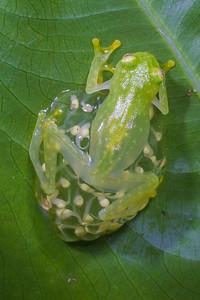 Biodiversity Group, _MG_0991