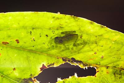 Biodiversity Group, DSC00157