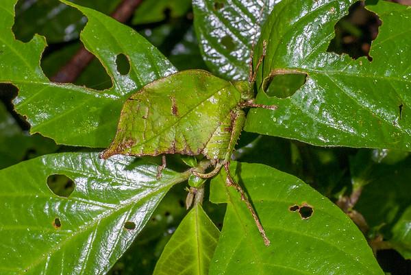 Biodiversity Group, DSC02580