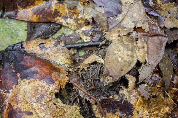 Biodiversity Group, IMG_0331