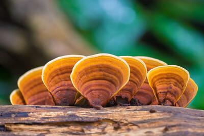 Biodiversity Group, _DSC3859