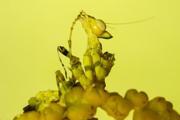 Biodiversity Group, _DSC3049