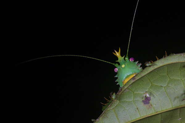 Biodiversity Group, _MG_8519