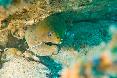 Biodiversity Group, DSC06634