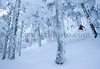 Backcountry skiing and riding in the Green Mountains, Vermont, USA<br /> <br /> ©Brian Mohr/ EmberPhoto - All rights reserved