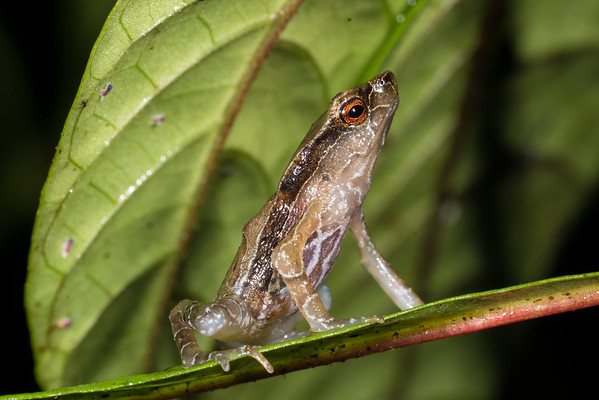 Biodiversity Group, _DSC3956