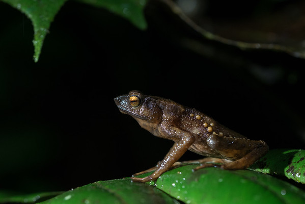 Biodiversity Group, _DSC5286