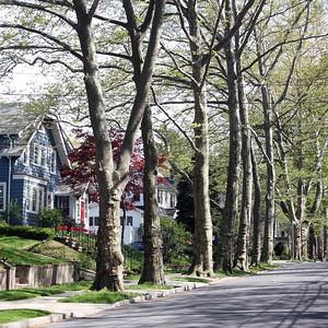 Suburban Streets