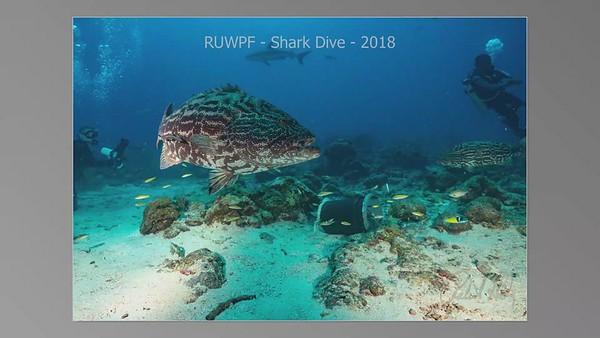 RUWPF - Shark Dive - 2018