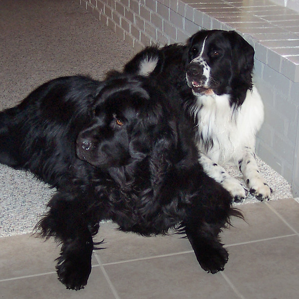 Caesar was adopted first and then Raffa quickly joined the family. Caesar and Raffa equal twice the love and twice the fun!