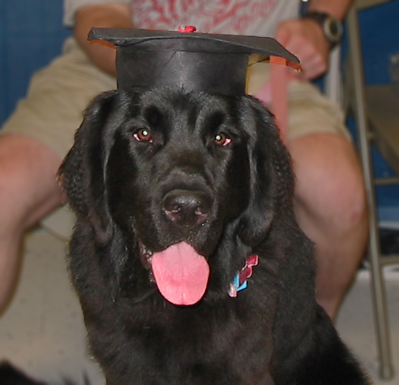 Zoe on graduation day from obedience school. Such a smart girl!