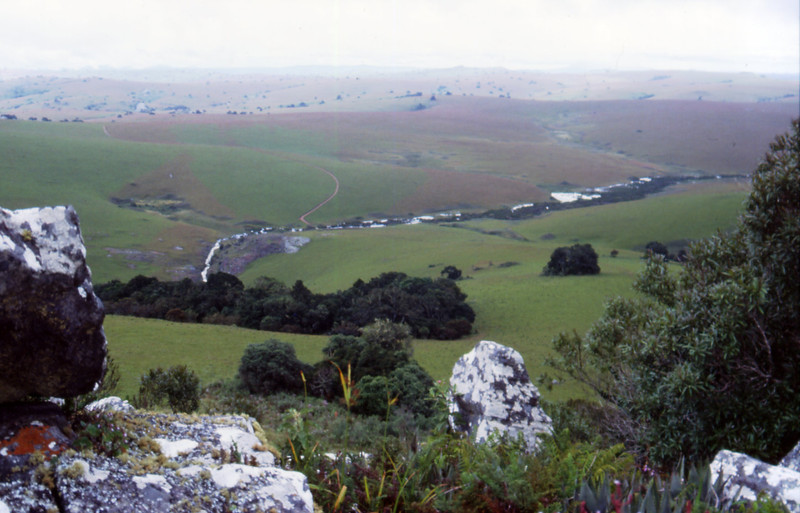 Aeollanthus subacaulis habitat: The vegetation of the Nyika-Plateau in N Malawi is dominated by rolling grassland with interspersed islands of afromontane forests and rocks outcrops (Malawi, Nyika-Plateau, Chelinda Peak, 30.03.1991).<br /> <br /> The rock outcrops represent edaphical arid microniches within a humid surrounding and inhabited by many succulents such as Aloe mzimbana (leaf tips lower right).<br /> <br /> Aeollanthus subacaulis var. linearis (with narrow linear leaves) inhabits rock outcrops, whereas Aeollanthus subacaulis var. subacaulis (with broader leaves) grows among grasses in the grasslands.<br /> <br /> See also: Thiede, J. (2009): Aeollanthus subacaulis (Baker) Hua & Briq.: eine caudiciforme Lamiaceae am Standort und in Kultur. Avonia 27(1):3-8, 2009.