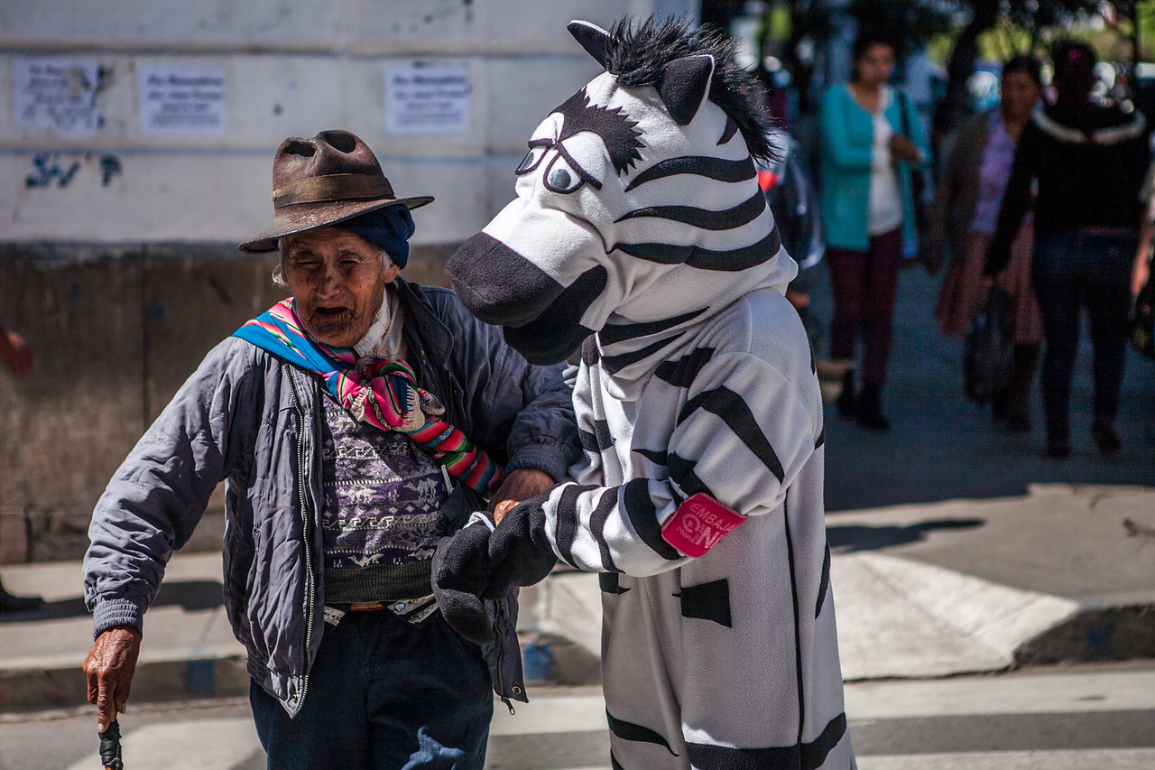 Zebras helping at the zebra crossing in Sucre, Bolivia