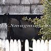 Commack F D  House Fire 42 Deepdale Drive 2-10-12-9