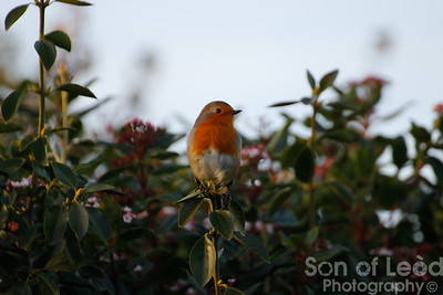 Robin in the caravan park