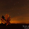 Stargazing on the beach
