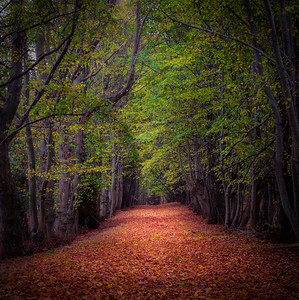 Path To Autumn