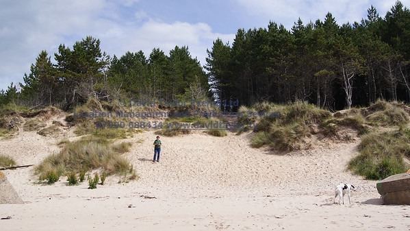 Roseislle Forest and Beach - 14