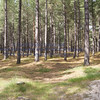 Roseislle Forest and Beach - 05